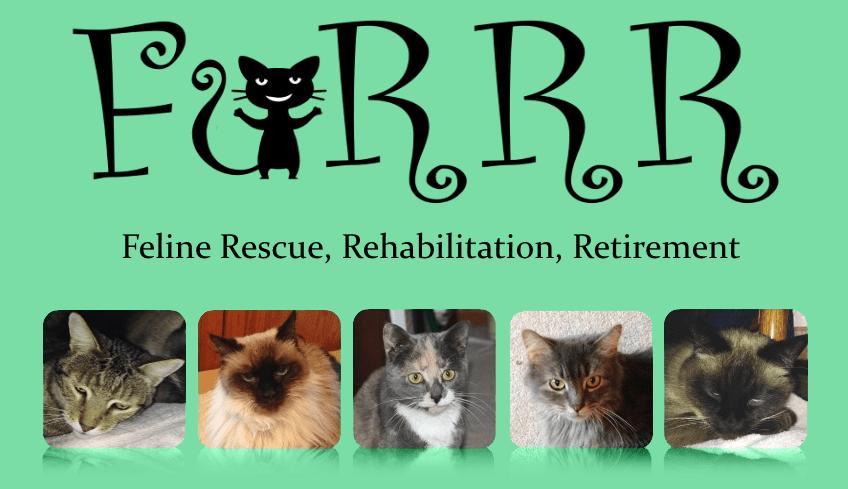Furrr Feline Rescue Rehabilitation Retirement Furrr Furrr