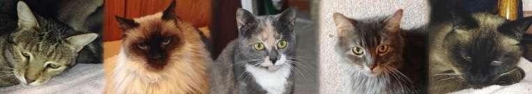 FuRRR Original Cats