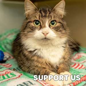 Donate to Cat Rescue