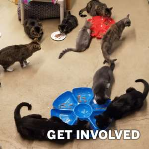 Volunteer Opportunity Cat Rescue