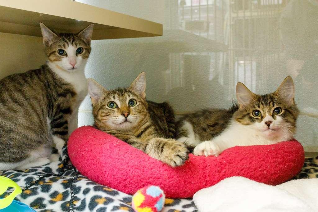 nh kittens for adoption