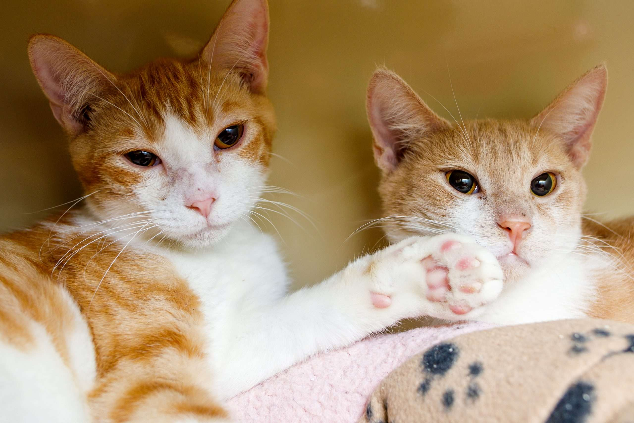 Cats for adoption near me
