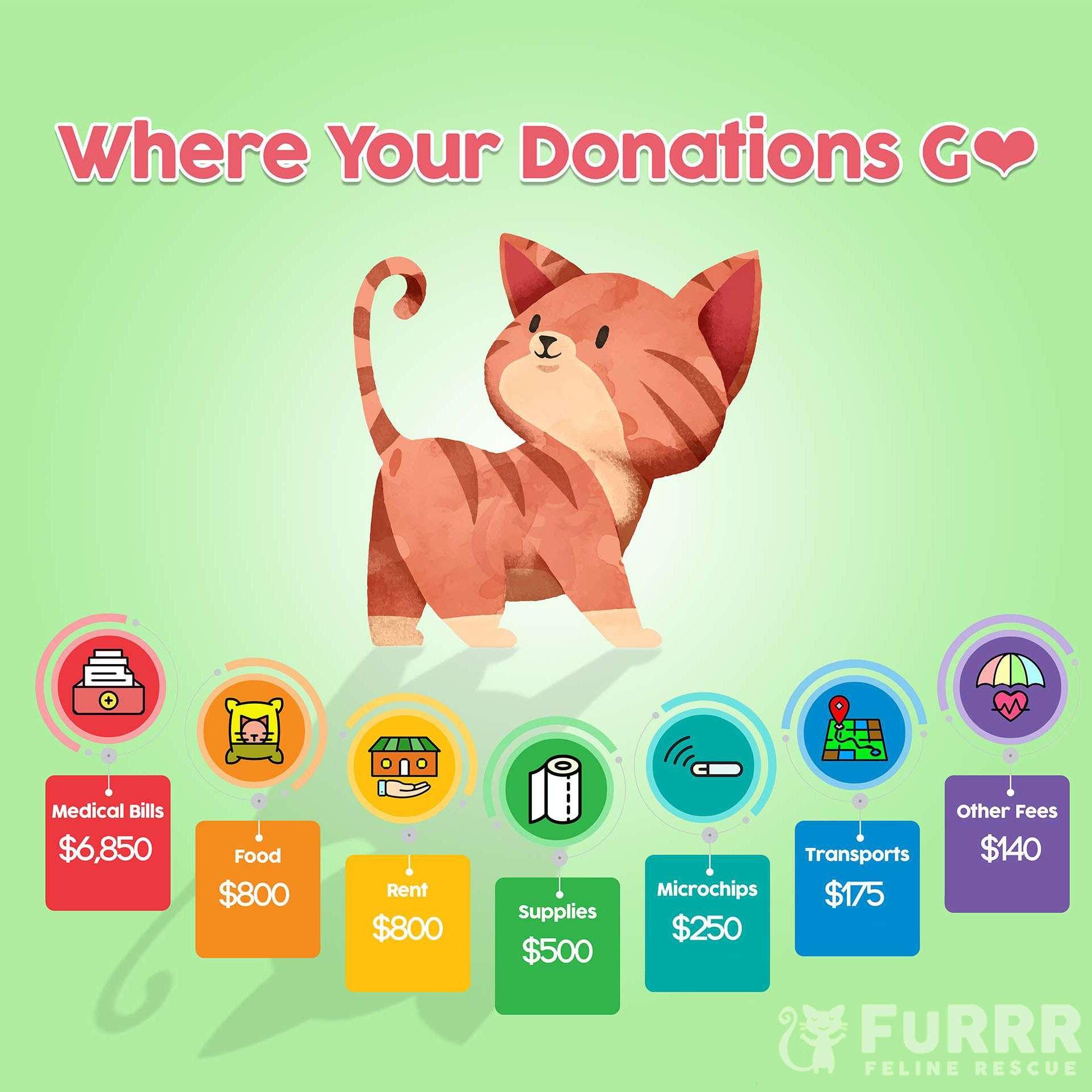 FuRRR-Feline-Cat-Rescue-Donations