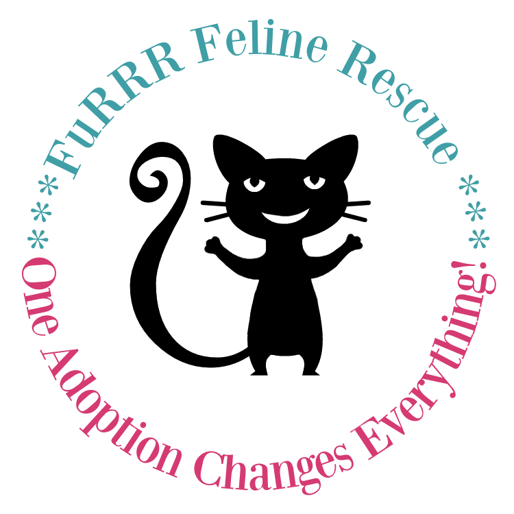 FuRRR Feline Rescue - Adopt Cats & Kittens NH