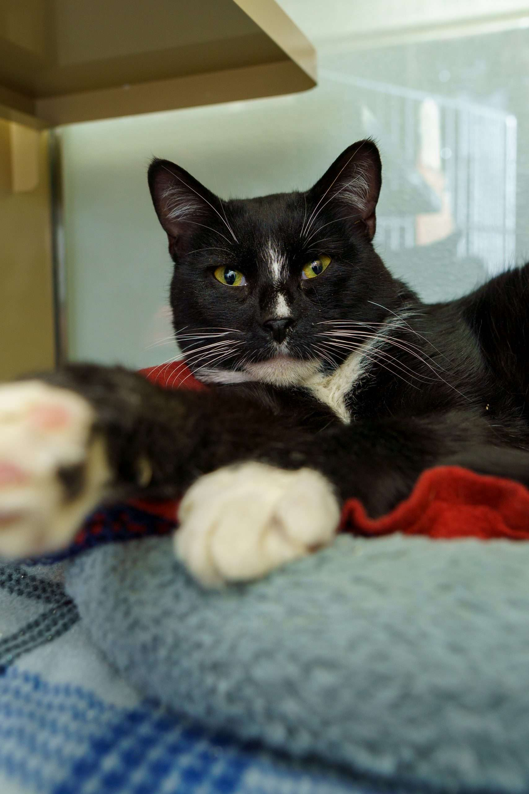 where to adopt a cat in new hampshire